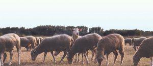 Consejos_para_diseñar_web_rural